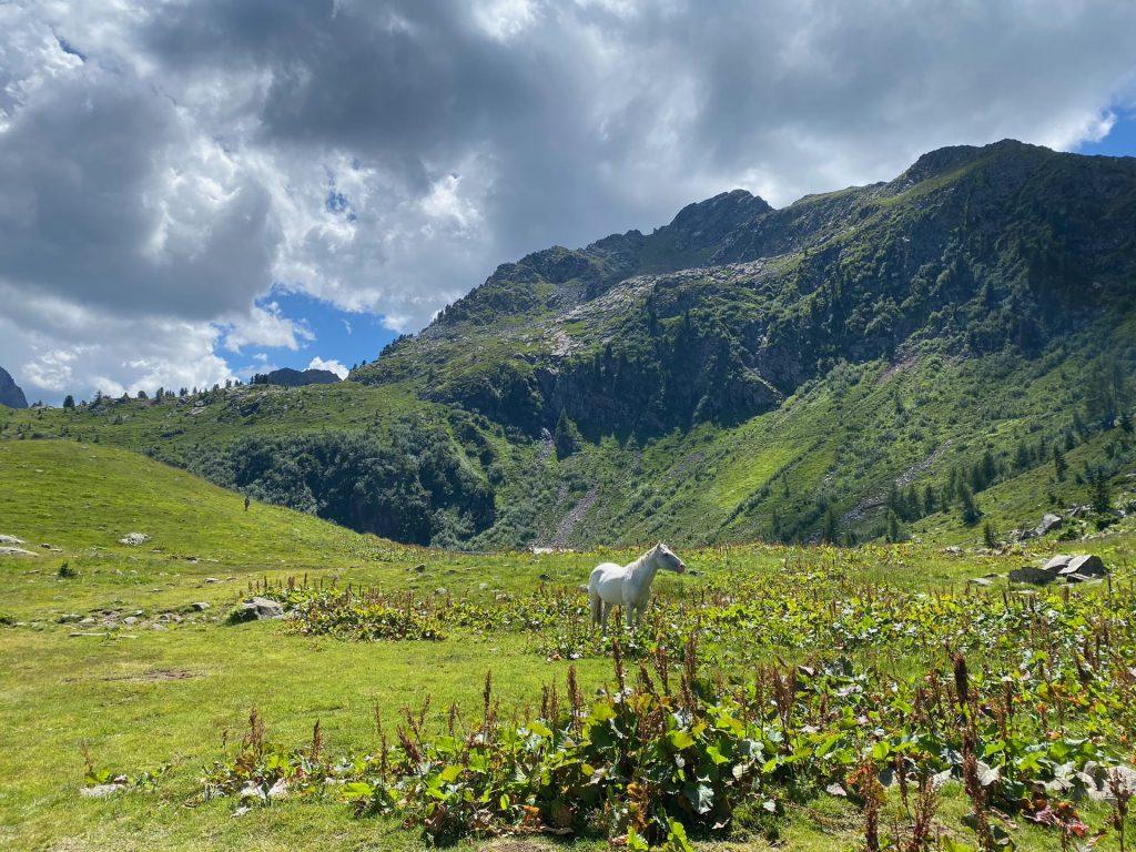 Valga Maggiore - Trentino